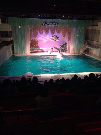 Watching the dolphin show at the Aburatsubo aquarium