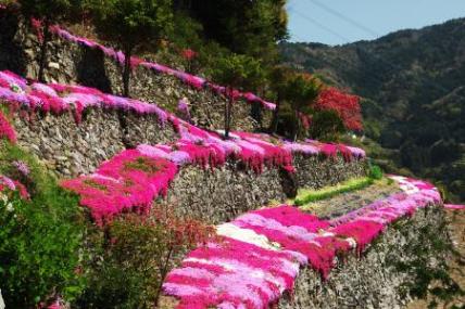 Picture http://tamamotora.blog41.fc2.com/