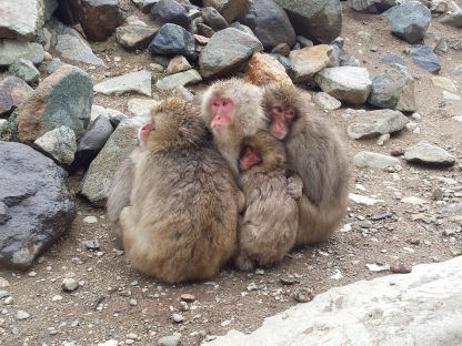 Even the monkeys are cuddling for some warmth!