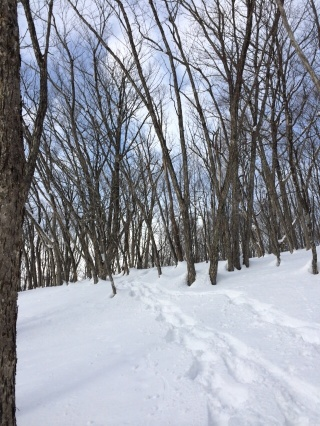 Snowshoeing through the forest on soft virgin snow.